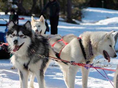 Randonn e chiens de traineaux midi pyr n es ari ge 09 for Balade chien de traineau doubs