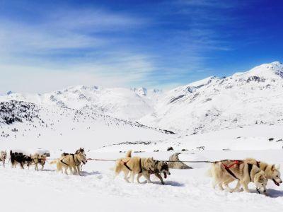 Balade chiens de traineau en Ariège